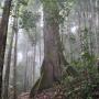 Primary tropical rainforest in Borneo
