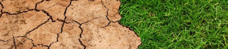 Dirt and grass