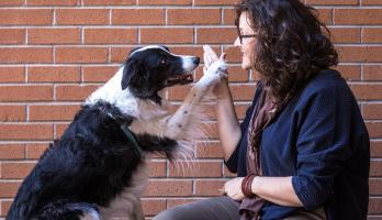 dog giving human high-five