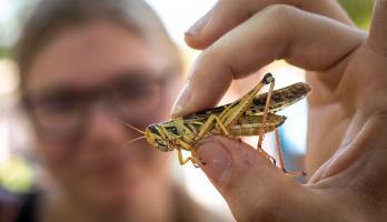 Locust ASU