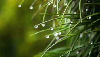 dewdrops on plant