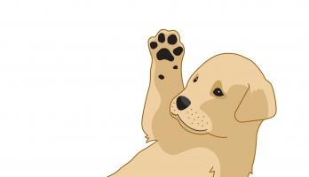 puppy paw illustration