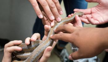 Hands on snake