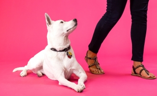 white dog laying down next to legs on red background