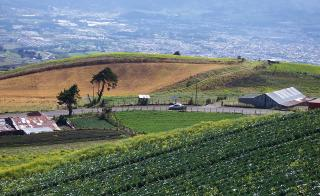 Farming field in Costa Rica