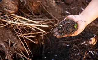 hand sifting compost
