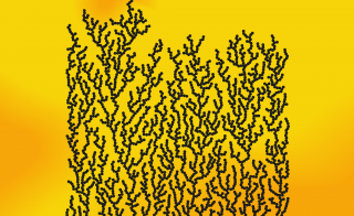 Dendrites are branching shapes that develop almost everywhere in nature