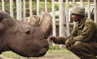 Sudan last white rhino