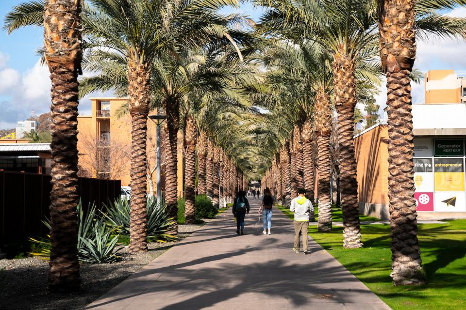 ASU Palm Walk