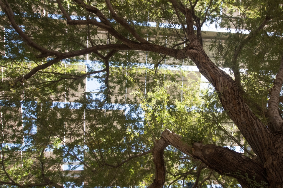 Solar structures as seen through tree branches