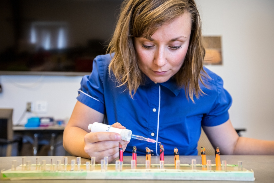 Dr. Chelsea Cook studying bees at ASU