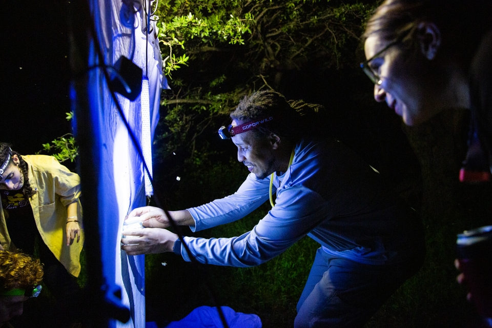 collecting insects at night