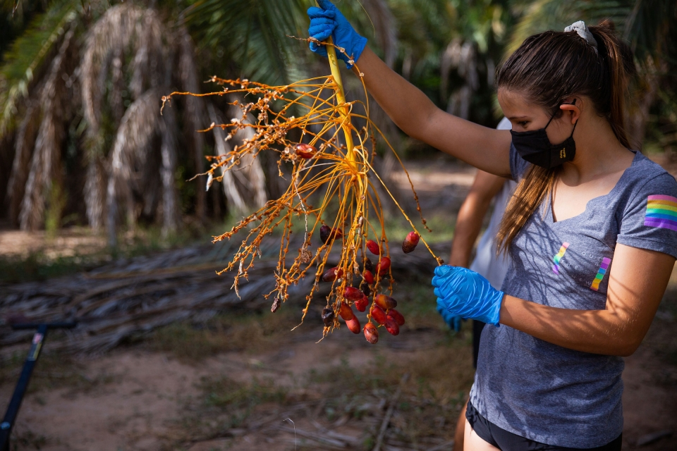 woman holding date palm branch