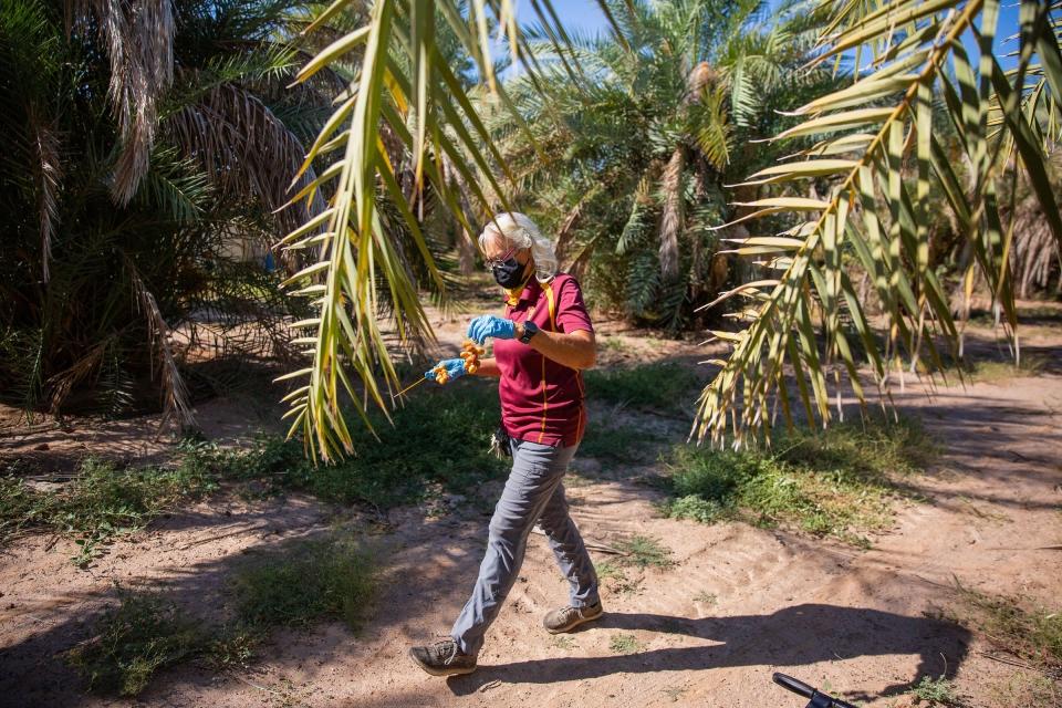 woman walking through date palm grove