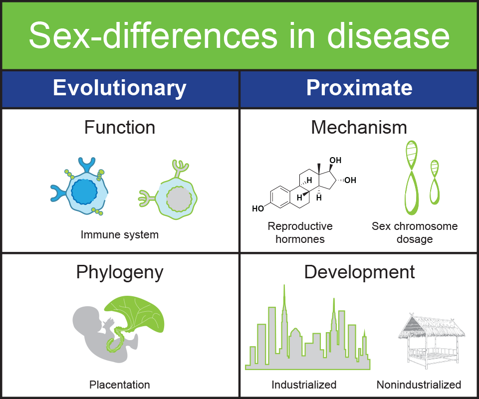 graphic on sex differences