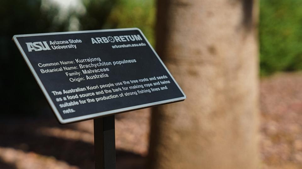 ASU arboretum
