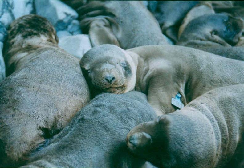 A team of seals