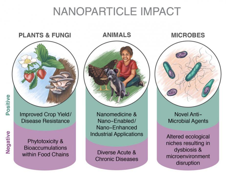 Nanoparticle Impact