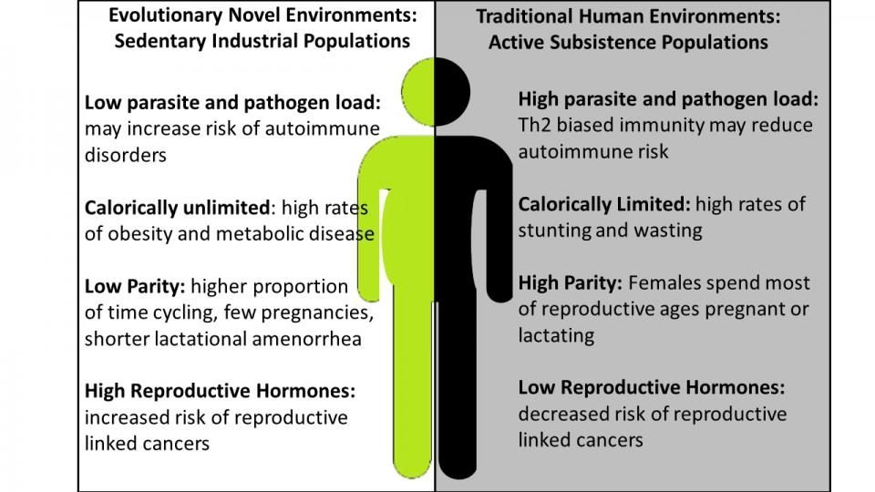 sexual differences in disease diagram