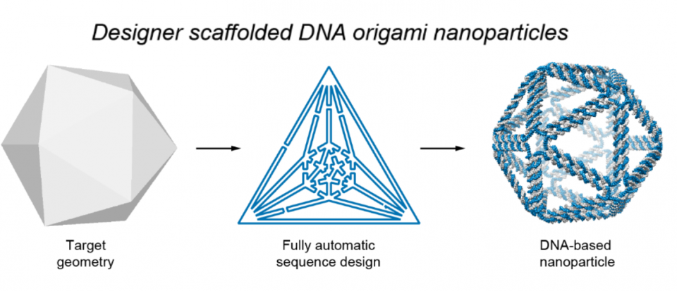 Illustration of the process to design DNA origami nanostructures.