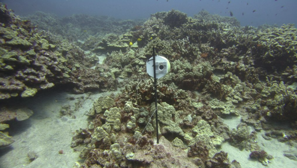 Coral bleaching on Hawaii's Big Island