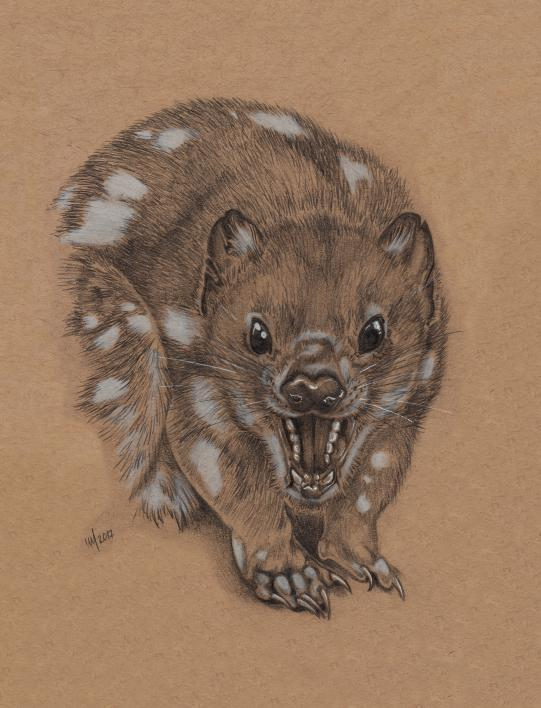 illustration of a tiger quoll