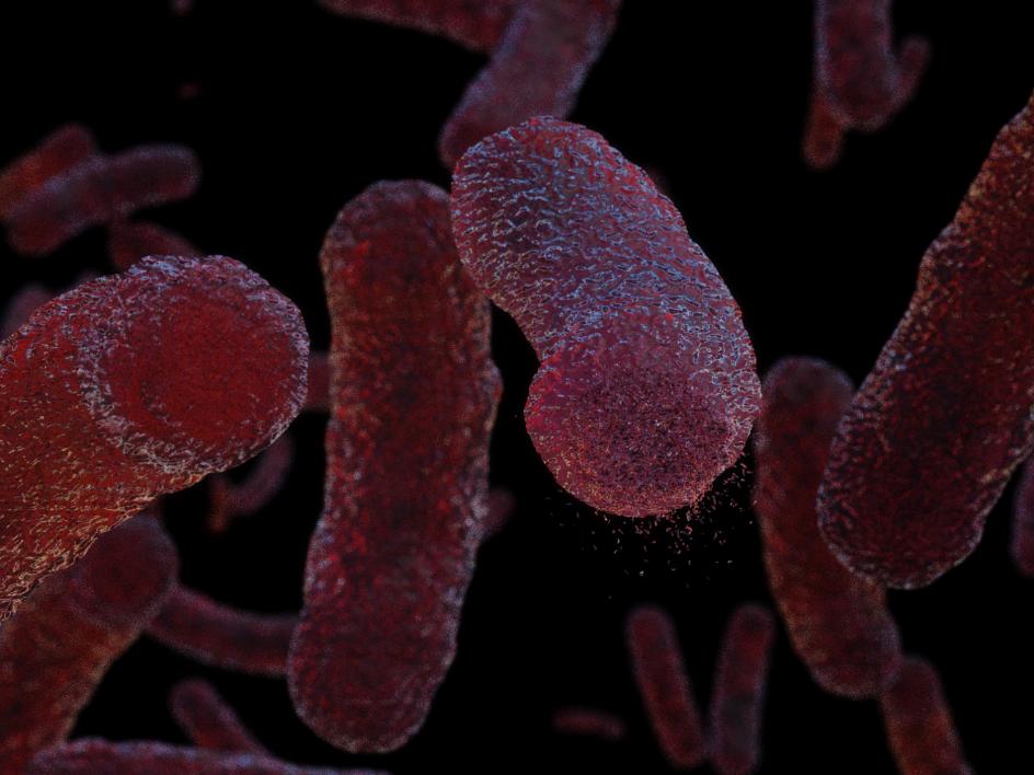 Tuberculosis bacteria.