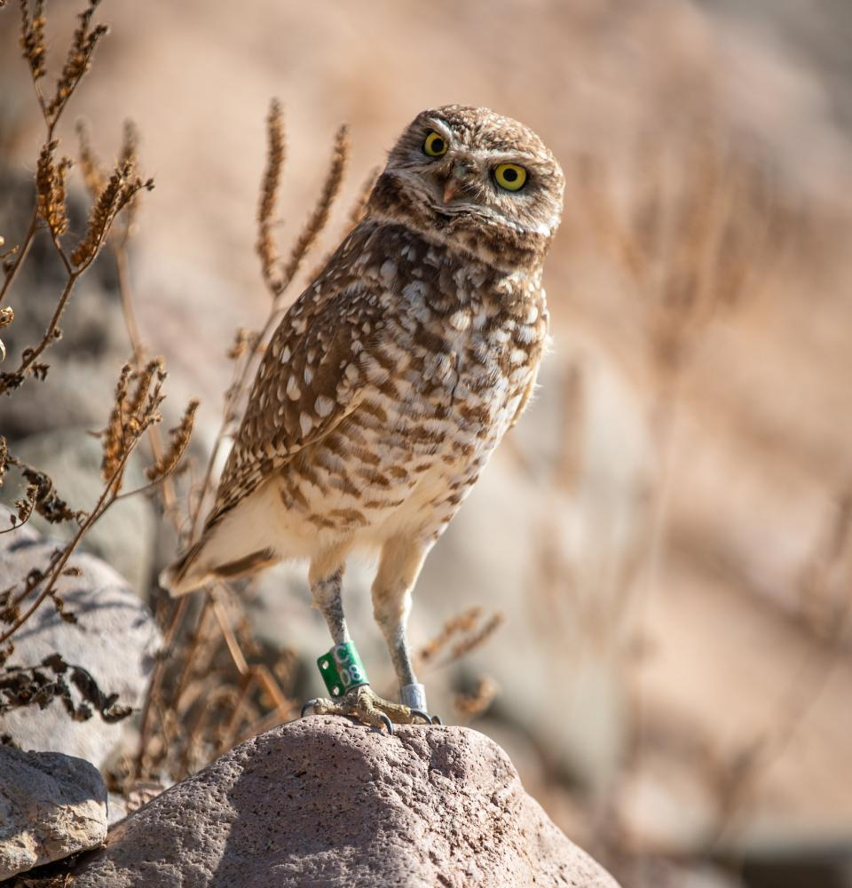 Owl standing on rock
