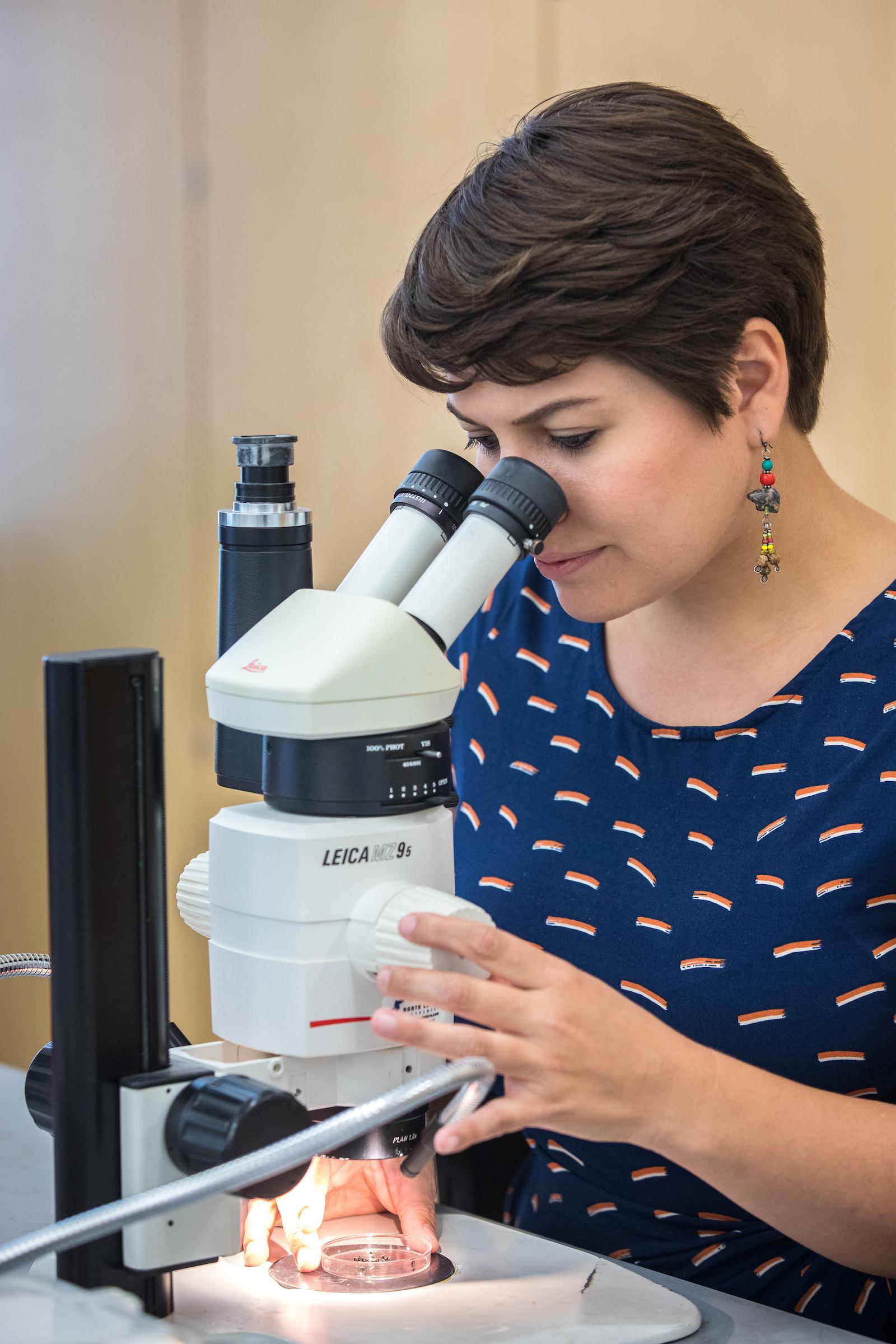 ASU postdoctoral researcher Christina Kwapich examines insects through a microscope