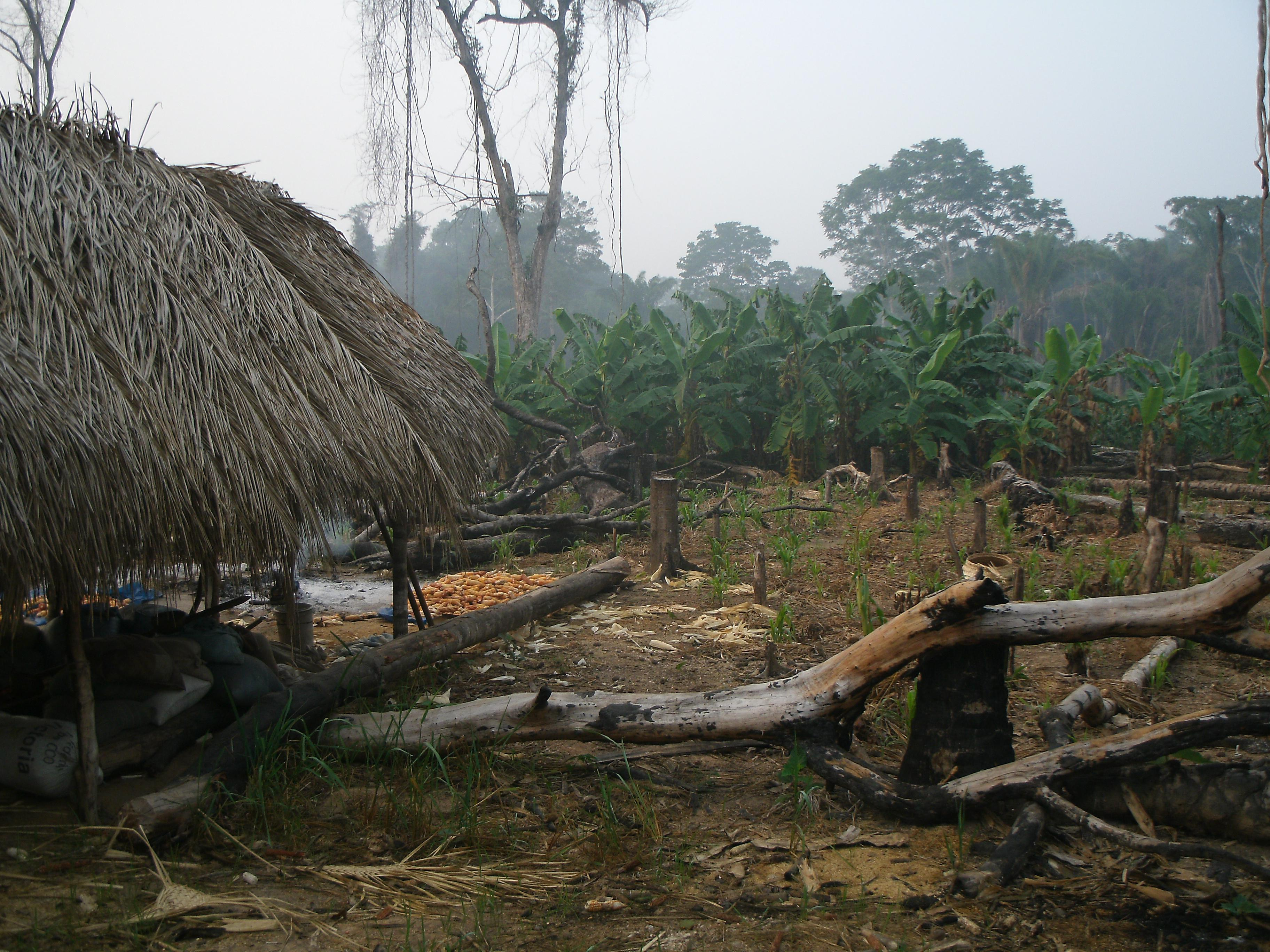 photo of Tsimane house and horticultural plot