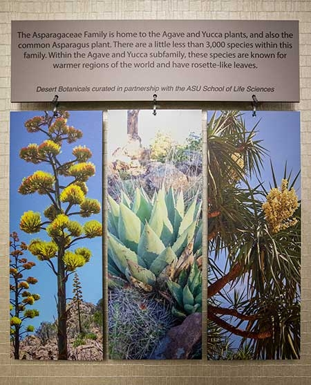 A wall display shows large photos of various desert flora
