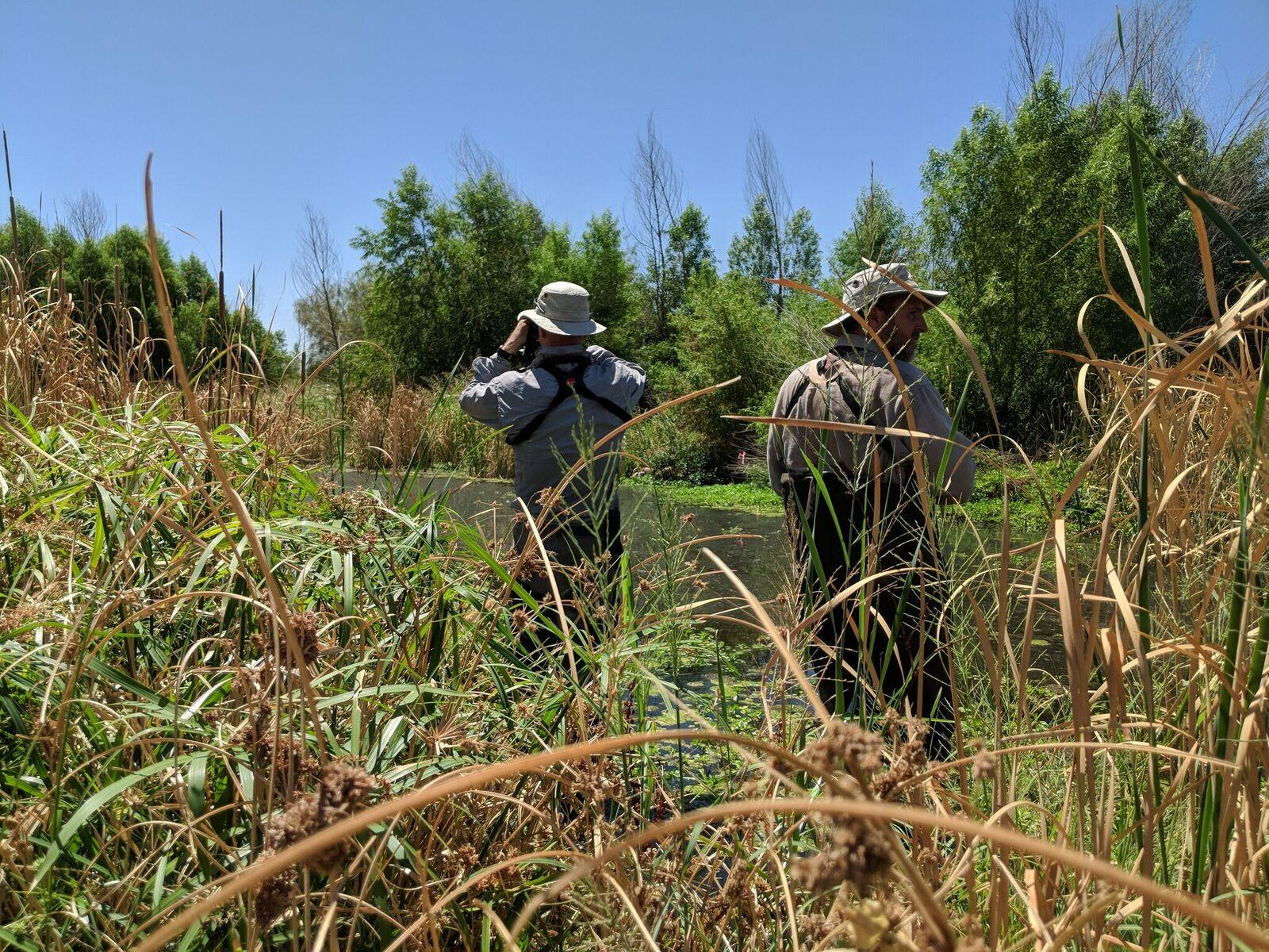 CAP LTER researchers study Arizona wetlands