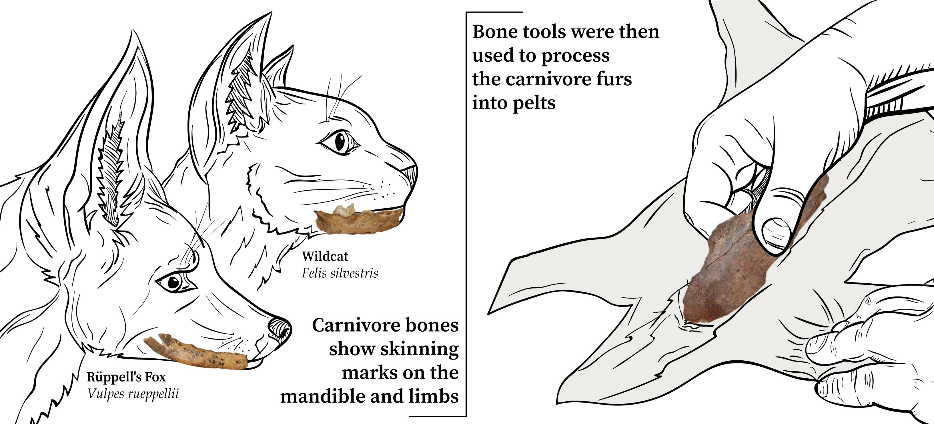 contrabandiers bone example
