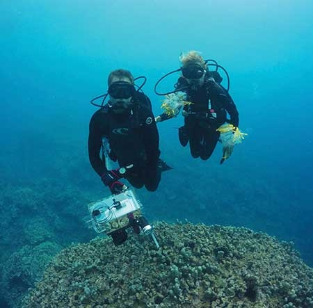 A man and a woman scuba diving near a coral reef