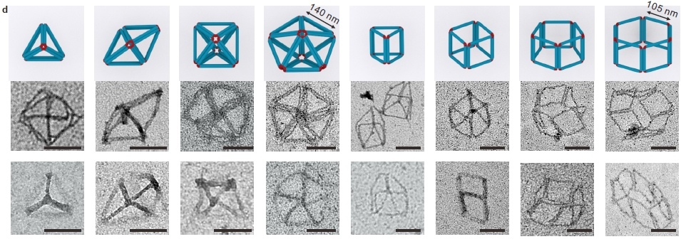 models and TEM images