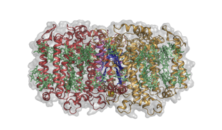 Structure of the Heliobacterium modesticaldum photosynthetic reaction center-photosystem
