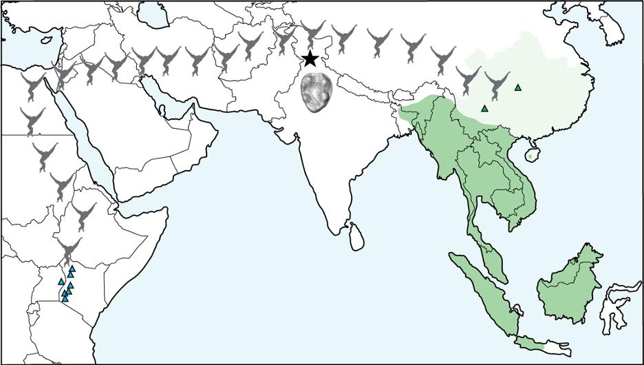 map_of_gibbon_migration