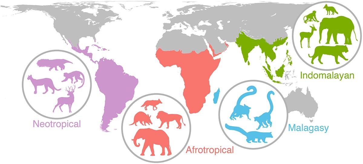 Global mammal map