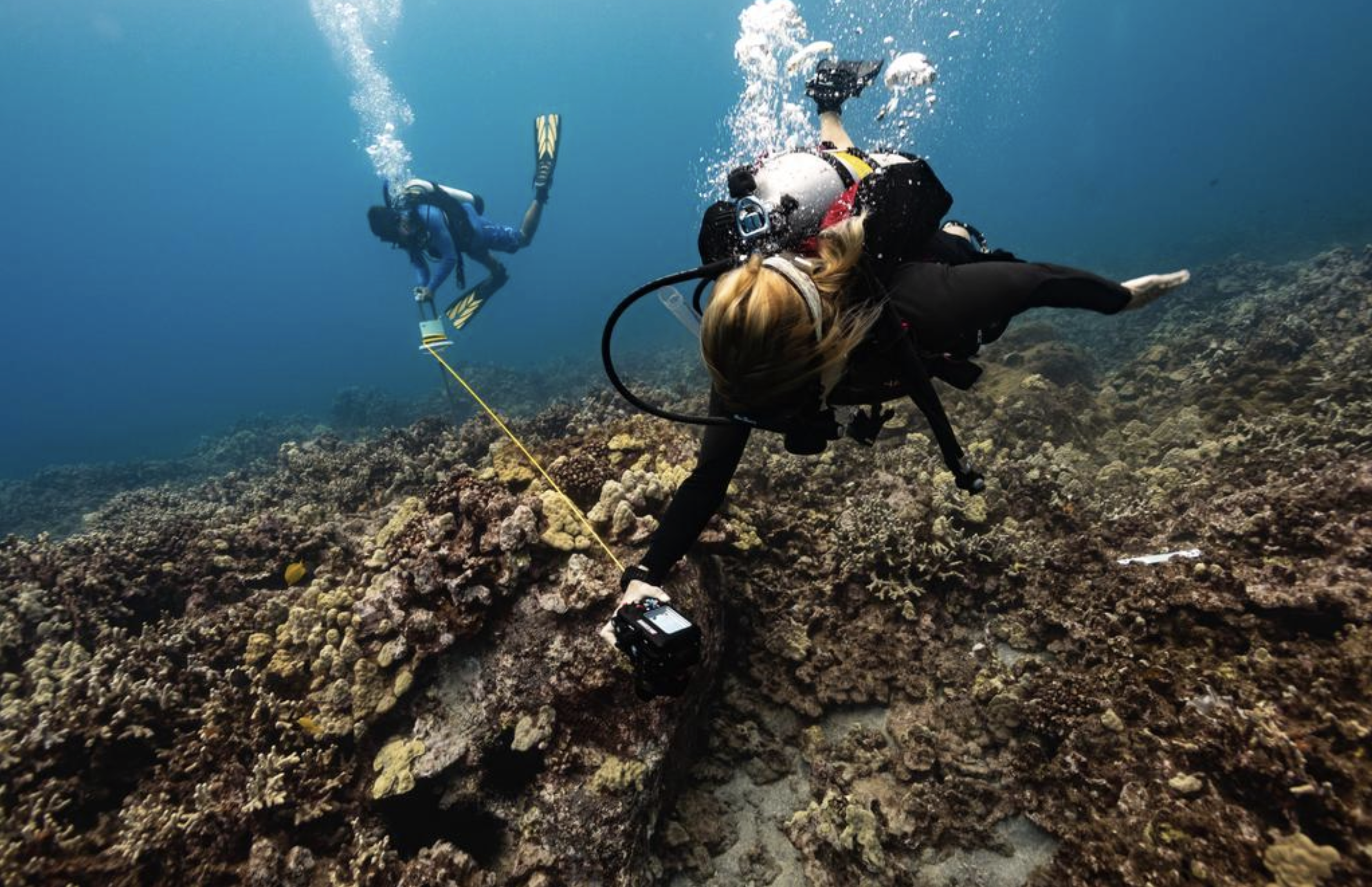 ASU scientists map the Hawaii's coral reefs during a bleaching event