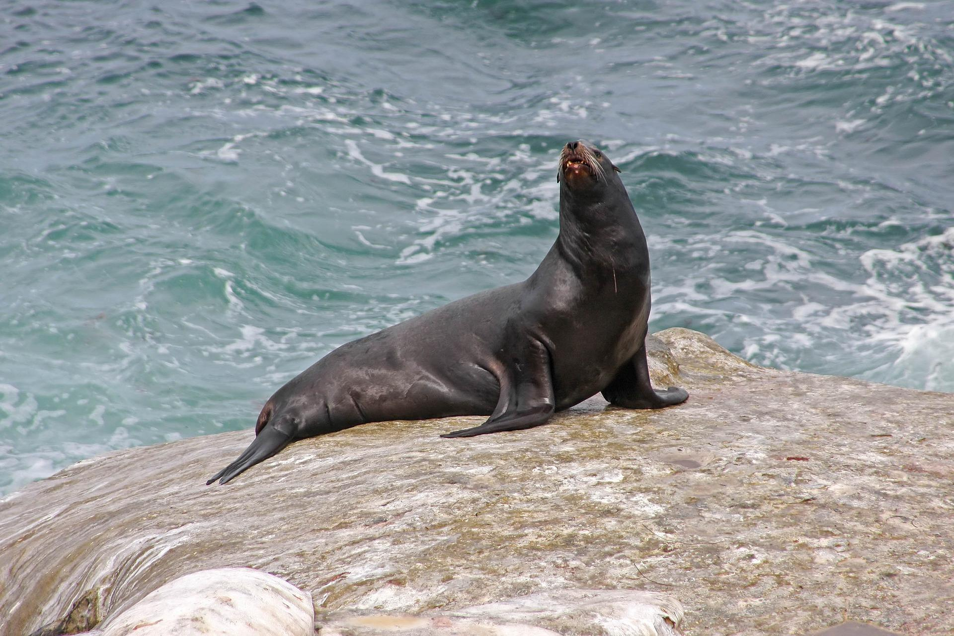 photo of sea lion on rock