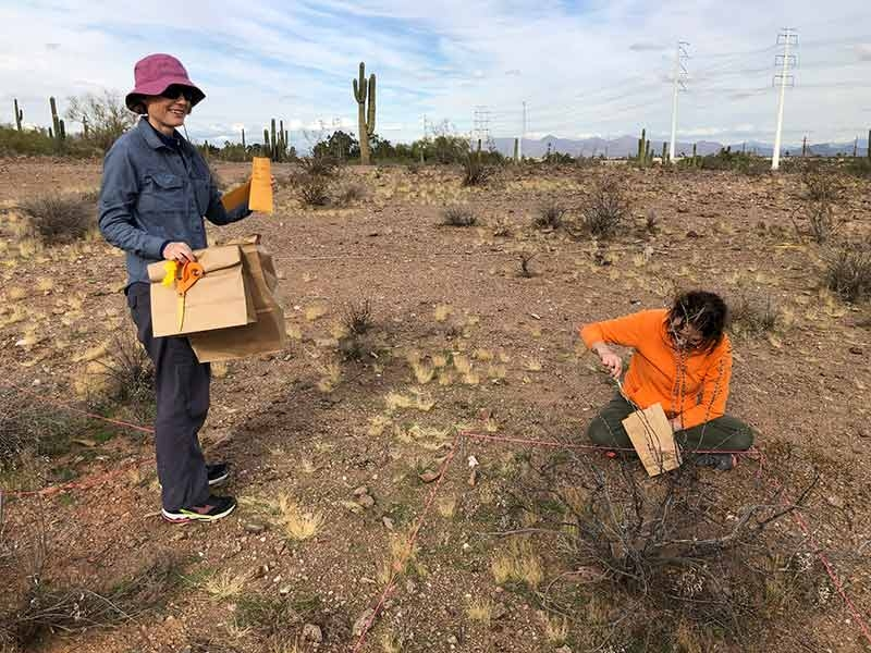 ASU prof collecting litter samples in desert