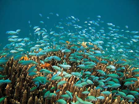 Fish swim in the Dauin National Marine Sanctuary in the Philippines