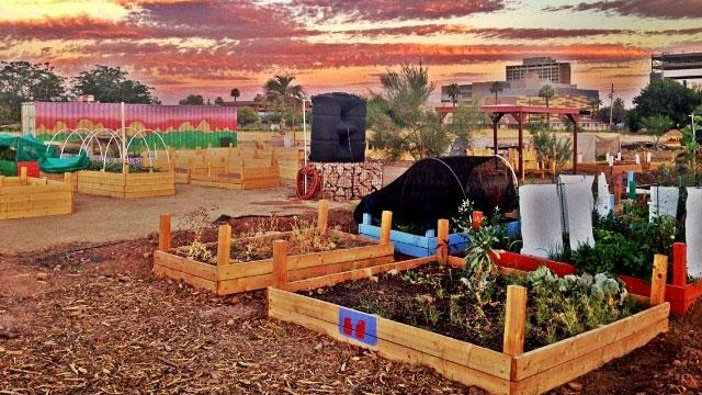 Urban farming in Phoenix