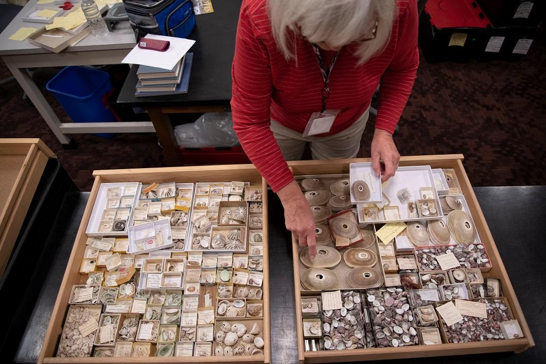 Arizona State University Natural History Collections