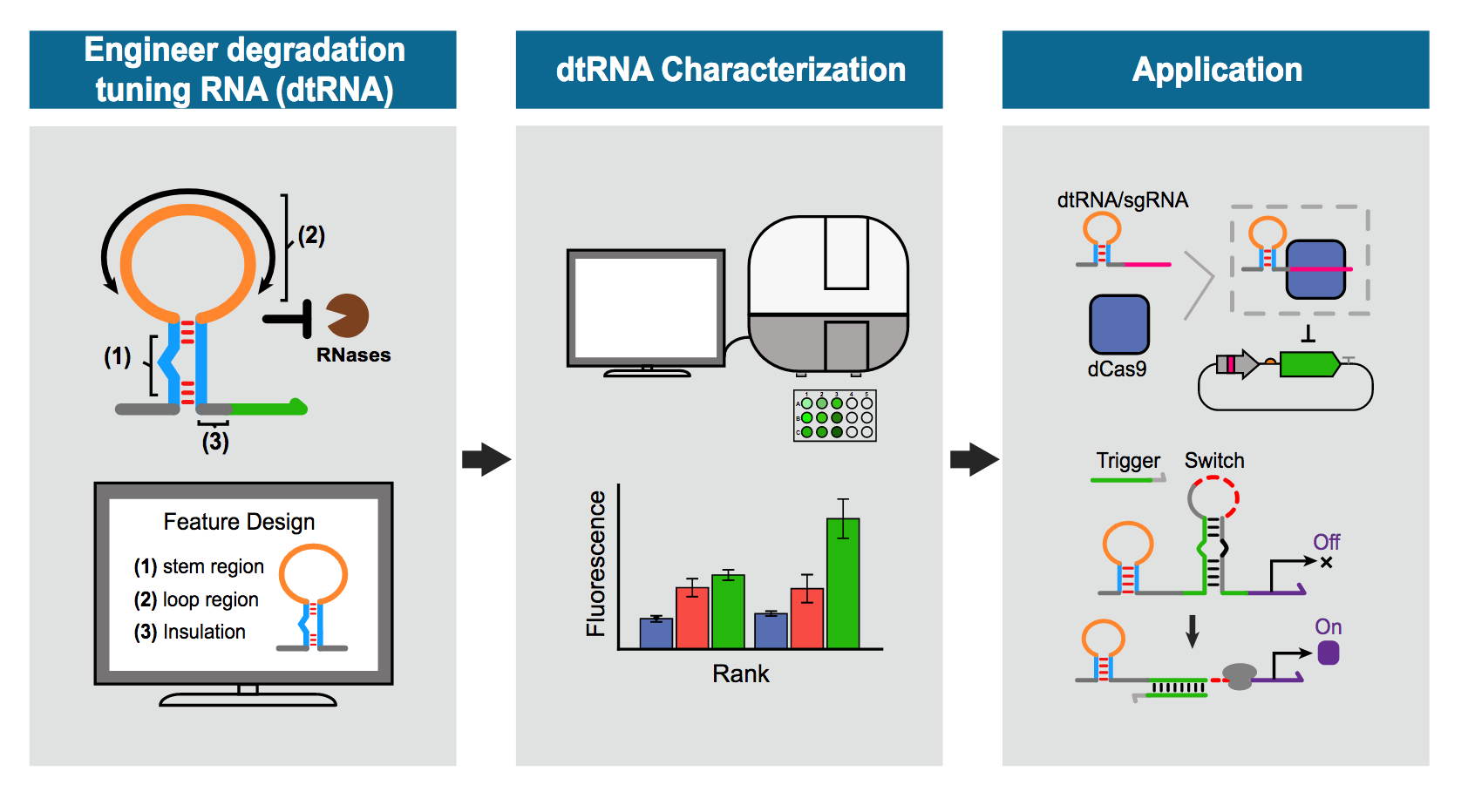 illustration shows engineering of degradation tuning RNAs by characterizing their structural features.