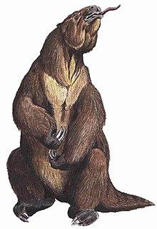 slothlike creature standing on hind legs