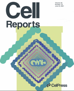 ASU research featured on the cover of the journal Cell Reports